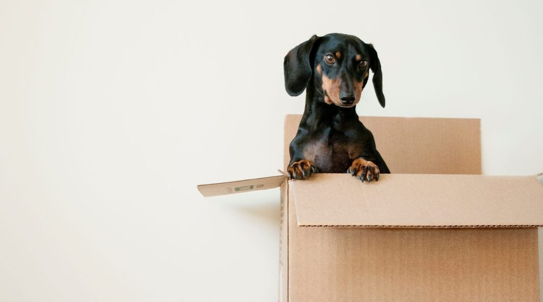 Five ESSENTIAL things to do when you're moving house